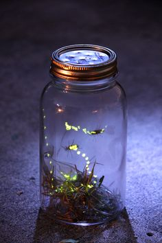 adventures in capturing fireflies - memories flood back...  Hopefully our grandchildren can have this experience.