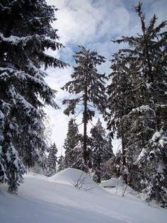 Freizeit & Aktiv Bischofsmais Habischried Aktivurlaub Bayerischer Wald Wandern Skifahren Geißkopf Aktiv, Snow, Outdoor, Ski, Hiking, Woodland Forest, Vacation, Outdoors, Outdoor Games