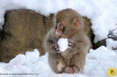 Самые смешные фотографии животных на конкурсе Comedy Wildlife Photography Awards (20 фото)