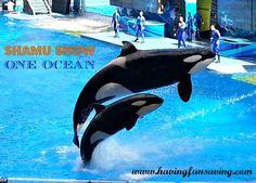 SeaWorld Orlando – 1 year anniversary trip! I think so :)