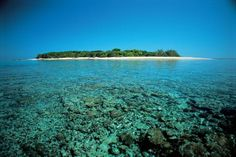 Lady Musgrave Island - Great Barrier Reef