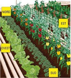 vegetable gardening for dummies Backyard Vegetable Gardens, Vegetable Garden Design, Home Grown Vegetables, Organic Vegetables, Planting Vegetables, Clover Lawn, Gardening For Dummies, Grow Organic, Front Yard Landscaping