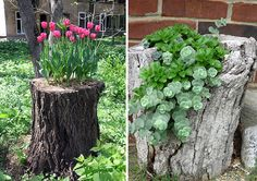 12+ Old Tree Stumps Turned Into Beautiful Flower Planters