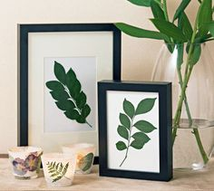 How to press plants    As well as pressed flowers, pressed plants can make provide a nice decorating idea.