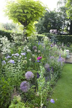 Alliums give nice height in this planting they are from the same family as onion, garlic, chives, scallion, shallot, and leeks.
