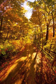 Up Hill Both Ways by Phil Koch - Photo 127593475 - (Wisconsin) Autumn Forest, Autumn Art, Beautiful World, Beautiful Images, Beautiful Sunset, Autumn Scenes, Nature Posters, Autumn Aesthetic, All Nature