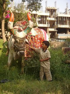A little boy with an exotically decorated  Nandi Bull.Nandi (Sanskrit: नंदी), is the bull which Shiva rides and the gate keeper of Shiva in Hindu mythology. A statue of Nandi facing the main shrine will be seen in most Shiva temples. There are also a number of temples dedicated solely to Nand.i