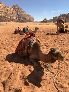 Camel, Animals, Vacation Travel, Past, History, Animales, Animaux, Camels, Animal
