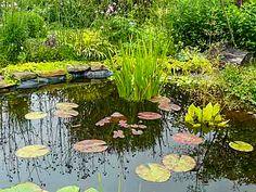 Maison et habitat pour grenouilles et crapauds en - L eau du robinet c est pour les grenouilles ...