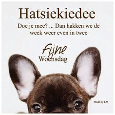 Woensdag ! Happy Day, Happy Life, Wednesday Hump Day, Animals And Pets, Animal Pictures, Quote Of The Day, Good Morning, French Bulldog, Qoutes