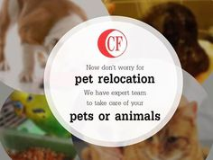 Now don't worry for #pet_relocation. We have expert team to take care of your pets or animals. We can #relocate your single pet or a group of pet or even group of #animals from zoo.