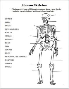 blank skeletal diagram 2003 mitsubishi pajero stereo wiring free printable human skeleton worksheet burials