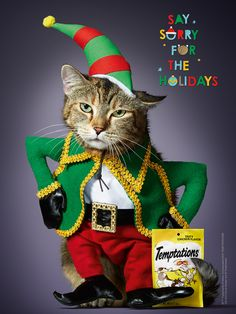 Say Sorry for Dressing Up Your Cat at the Holidays, With Temptations Cat Treats