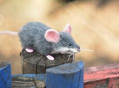 Mouse and skateboard Little mouse Wool mouse Funny mouse