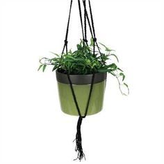COYNES - Dark Band Hanging Pot, Large - Green