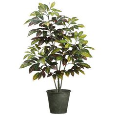 3' Croton Silk Plant w/Tin Pot -Green (pack of 2) *** You can get additional details at the image link.