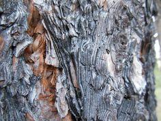 Pine bark :)