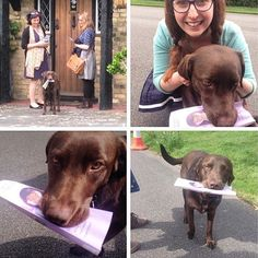 "This is Brian ""the ministry dog"" from Surrey, England. He was the dog of a do-not-call but grabbed the leaflet from us and took it to his owner! Then he carried on and helped us with the rest of the street. It's amazing the ways Jehovah reaches people we cannot"