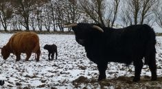 Mum, dad and newborn.