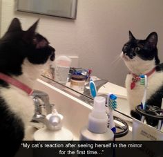 my cats reaction after seeing herself in the mirror for the first time
