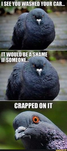 It would be a shame of somebody...crapped on it