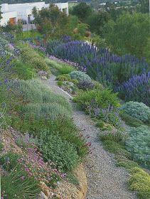 Trendy Backyard Ideas Sloped Yard Drought Tolerant - front yard landscaping ideas with rocks Landscaping On A Hill, Succulent Landscaping, Landscaping With Rocks, Landscaping Ideas, Mulch Landscaping, Steep Hillside Landscaping, Landscaping Melbourne, Country Landscaping, Tropical Landscaping