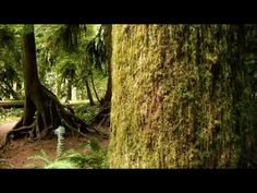 Cathedral Grove - Vancouver Island, Canada.
