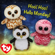 Swoops, Pinky and Owliver are kicking off the week with a HOOT!