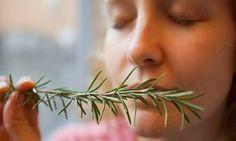 Ennek a fűszernövénynek a szagolgatása 75%-kal javíthatja a memóriádat! - Nyugdíjasok