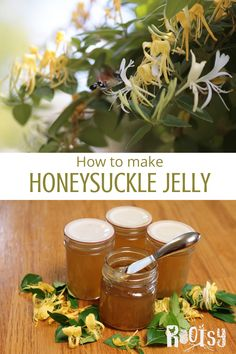 Honeysuckle jelly is a great way to preserve summer in a jar. Learn how to make this easy recipe today! Honeysuckle Jelly, Gallon Mason Jars, Jelly Recipes, Wild Edibles, Homemade Desserts, Preserving Food, Frugal Meals, Recipe Today, Preserve