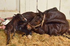 Country Life and Merryland Farms February 7 at 10:04pm ·  Big boy by Freedom Child out of Hurricane Isabella