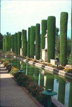 Garden Design Ideas : Italian Cypress Trees in a colonnade Boxwood Garden, Dry Garden, Garden Shrubs, Water Garden, Garden Landscaping, Italian Cypress Trees, Parks, Mediterranean Plants, Garden Of Earthly Delights