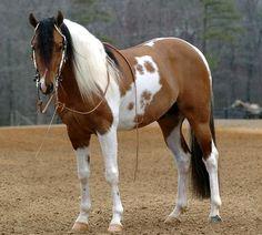 dun paint horse - Sagittarius