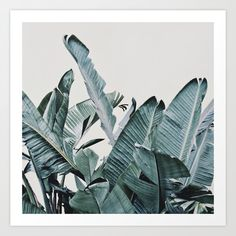 Plumage Photo Print | Society6