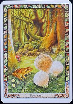 Druid Plant Oracle: Puffball