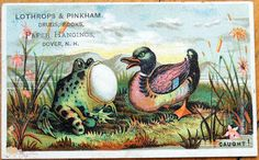 Victorian Trade Card: Toad/Frog & Duck - Lothrops & Pinkham Drugs, Books, Paper