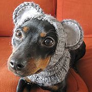 DIY dog hats.. AHAHA...like any dog would put up with this, pinned it anyways :) Think Lily would rip my ankles off!