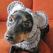 DIY dog hats