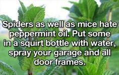 Natural repellant