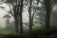 Dark Green Aesthetic, Nature Aesthetic, Aesthetic Images, Foggy Forest, Dark Forest, Dark Paradise, Forest Fairy, Pretty Photos, Dark Places