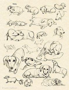Daschund sketches #Dachshund