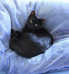 Black cat - reminds me of my cat Raven of 15 years ago