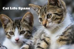 Blog post at SlimKitty : Our companion animals have much shorter life spans than humans. Our main objective is to give our dogs and cats the longest and healthiest l[..]
