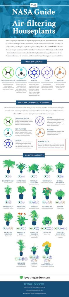 Because pollution is everywhere, this is the NASA Guide To Air-Filtering Houseplants. Was it actually made by NASA? Maybe it was just made by somebody pretending to be NASA. I& pretended to be from NASA to. Air Filtering Plants, Best Air Purifying Plants, Air Cleaning Plants, Plantation, Indoor Air Quality, Cool Plants, Perfect Plants, Green Plants, Gerbera