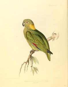 "https://flic.kr/p/dG6wsS | n111_w1150 | The zoology of the voyage of H.M.S. Sulphur :. London :Smith, Elder,1844 [i.e. 1843-1846]. <a href=""http://biodiversitylibrary.org/page/40020105"" rel=""nofollow"">biodiversitylibrary.org/page/40020105</a>"