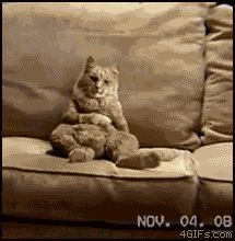 I love cat gifs and dog gifs. Funny Cats, Cute Cats, all the time.Big animals gif lover too. Anim Gif, Animiertes Gif, Animated Gif, Funny Cat Videos, Funny Cats, Funny Animals, Cute Animals, Miguel Music, Witch Room