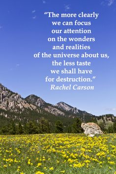 The more clearly we can focus our attention on the wonders and realities of the universe about us, the less taste we shall have for destruction. Rachel Carson Scenic drive image taken along CLOUD PEAK SKYWAY, near Crazy Woman Canyon, in WYOMING. Love scenic drives? Check out the Pinterest board, Travel: SCENIC DRIVES at https://www.pinterest.com/fmcginn/travel-scenic-drives/