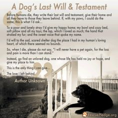Hope everyone will take this to heart and adopt a shelter dog!