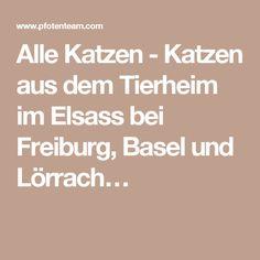 Alle Katzen - Katzen aus dem Tierheim im Elsass bei Freiburg, Basel und Lörrach…
