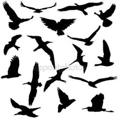 Kuş siluetleri vektör toplama — Stok İllüstrasyon #48006697 Vogel Silhouette, Bird Silhouette, Silhouette Vector, Marine Tattoo, Silhouette Pictures, Animal Sketches, Free Illustrations, Bird Prints, Lion King Birthday
